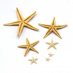 Kurutulmuş Gerçek Deniz Yıldızı