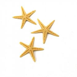 Polyester Deniz Yıldızı (6 - 9 cm / 25 adet)